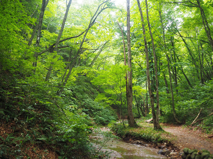 約10分の原生林トレッキング