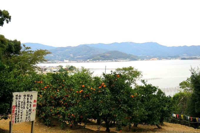 静岡のみかん収穫量は全国第3位!浜松自慢の「三ケ日みかん」