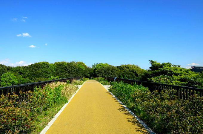 橋を渡って緑深い野鳥の世界へ