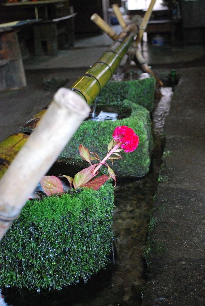 【涼】名前の由来がユニーク!湧水の宝庫、阿蘇神社門前町。