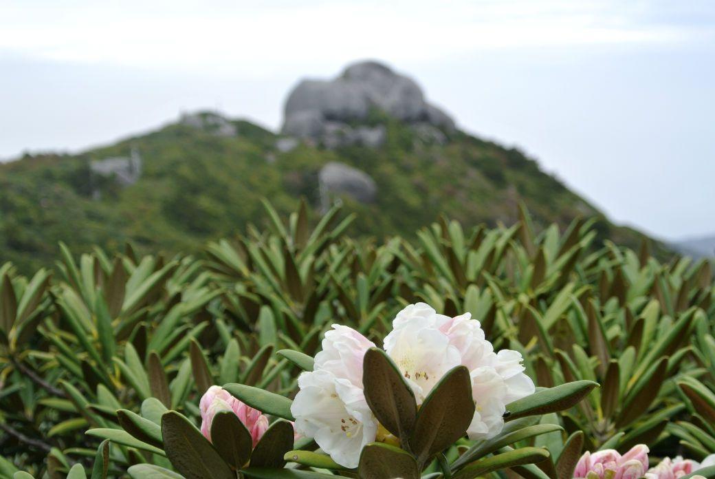 登山者だけが分かる屋久島の魅力!九州最高峰・宮之浦岳縦走のノウハウ