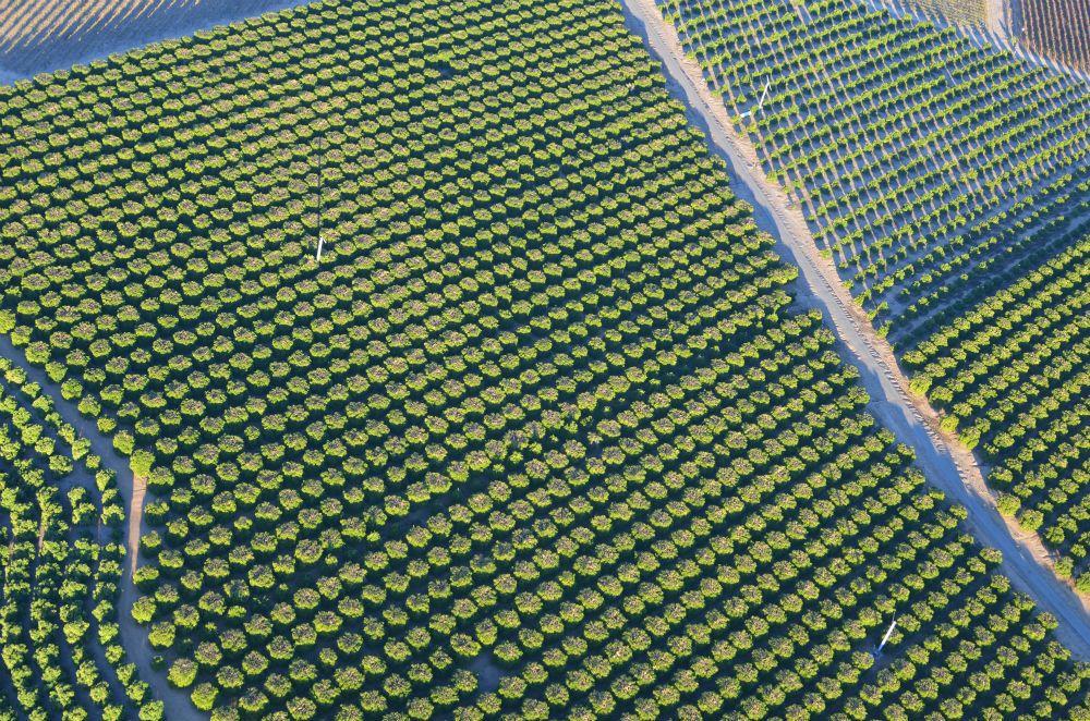 ブドウ畑とフルーツ畑の見事なコントラスト