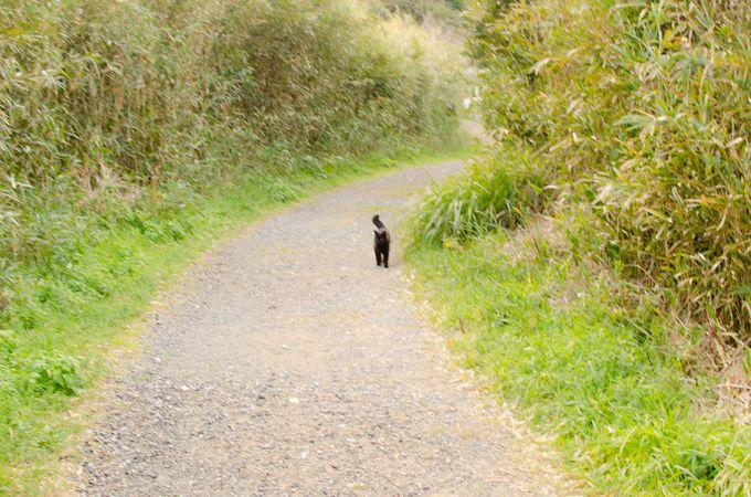 島時間でゆっくりハイキング。時にはネコも一緒に。
