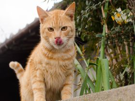 世界も認めたハート型のネコの楽園!福岡県「相島」