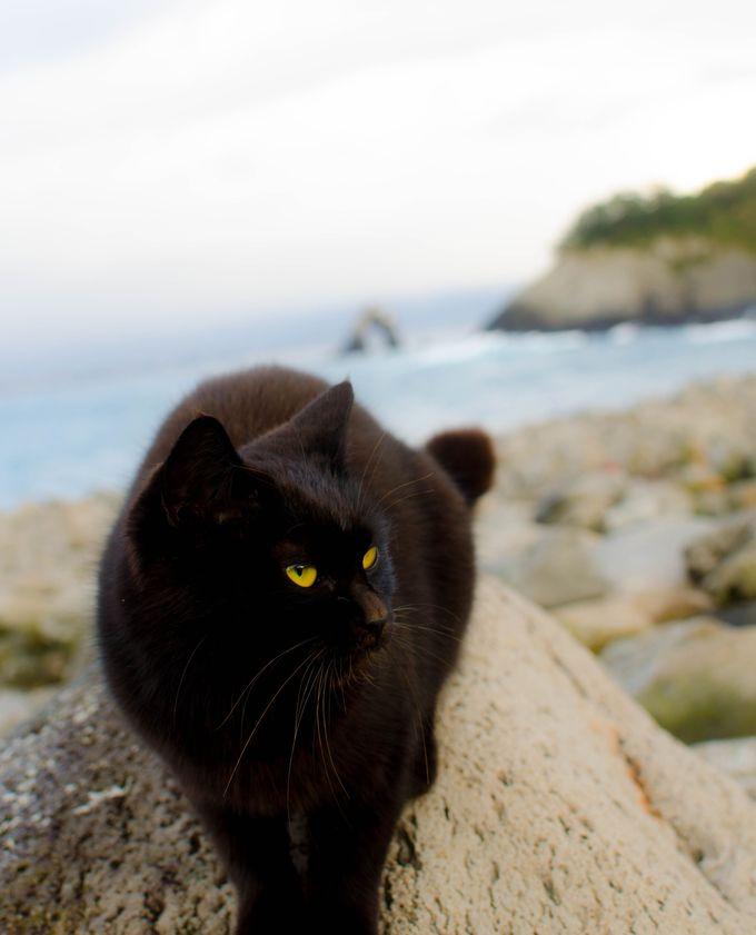 海の青さとめがね岩の絶景が楽しめる「積石塚群」
