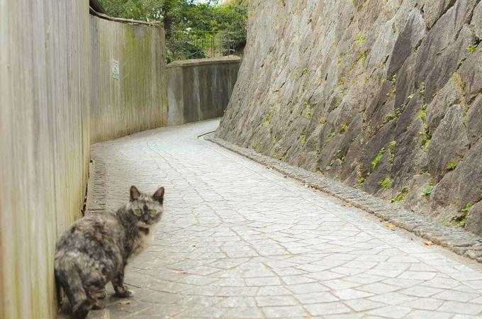 千光寺までは体をウォーミングアップするため歩いて登ろう