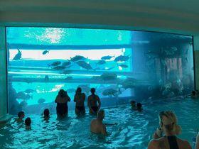 サメに食べられる〜!ラスベガス「ゴールデン・ナゲット」のプールが人気なワケ