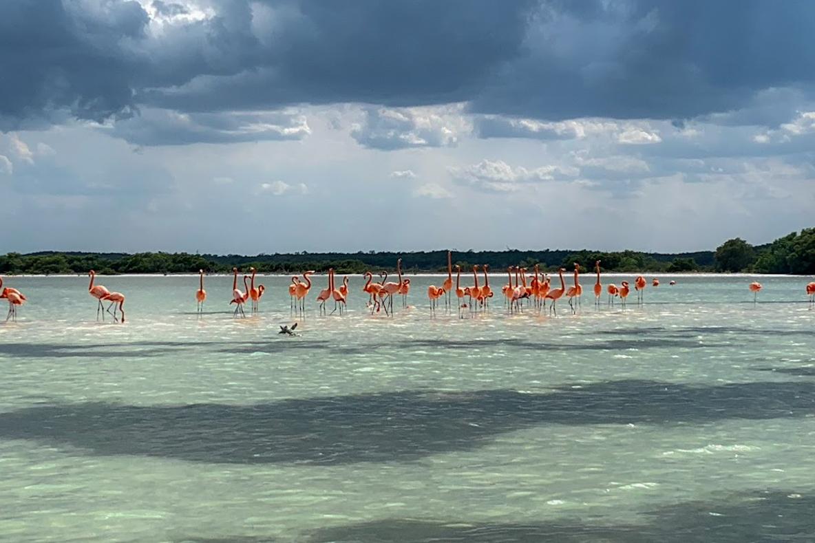 400種近くの鳥が住む「鳥の楽園」