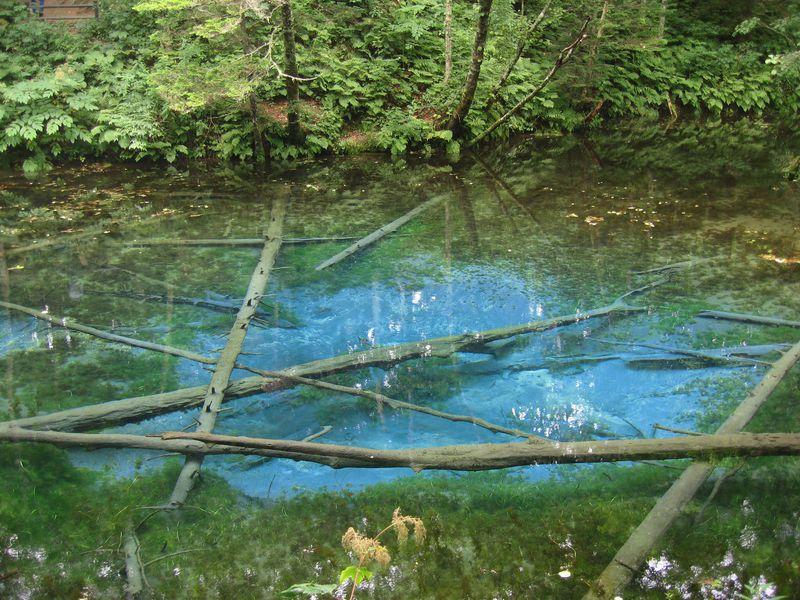 神の子池にサクラマスの滝越えまで!摩周湖周辺のドライブスポット