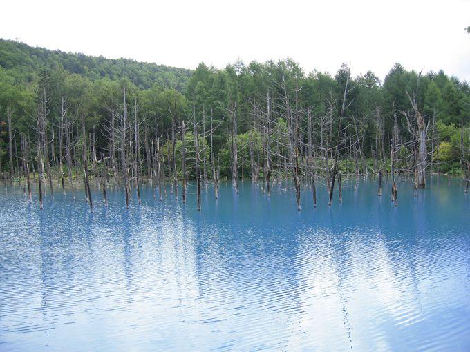 名前の通り青い!「白金青い池」