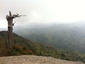 初めての屋久島登山で外せない見どころ4選!恋愛運上昇の株も!