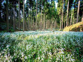 京都の神秘的な森を山歩き!綾部市君尾山トレッキングで癒しの女子旅