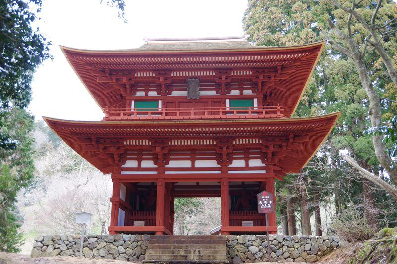 ミツマタ・シャガの群生地が人気の京都府綾部市・上林エリア