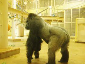 イケメンゴリラに「あーっ」と絶叫するサルも!名古屋市東山動植物園はキャラ立ち動物の宝庫