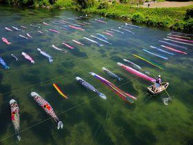 鯉が泳ぐのはやっぱり水の中!? 佐波川の「水中鯉のぼり」〜山口県