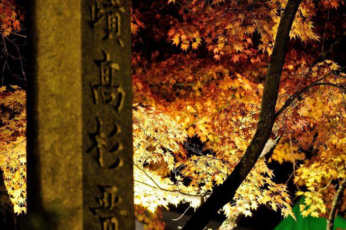 約200本の紅葉が圧巻!!下関市「東行庵」もみじ谷