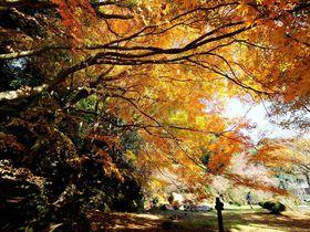 立ち尽くすほどに美しい!! 絶景の紅葉・美祢市「南原寺」