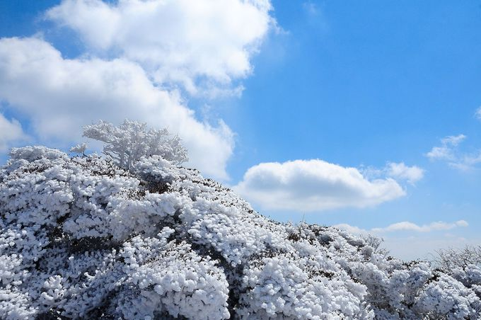 冬は霧氷も見られる!温泉の源「鶴見岳」