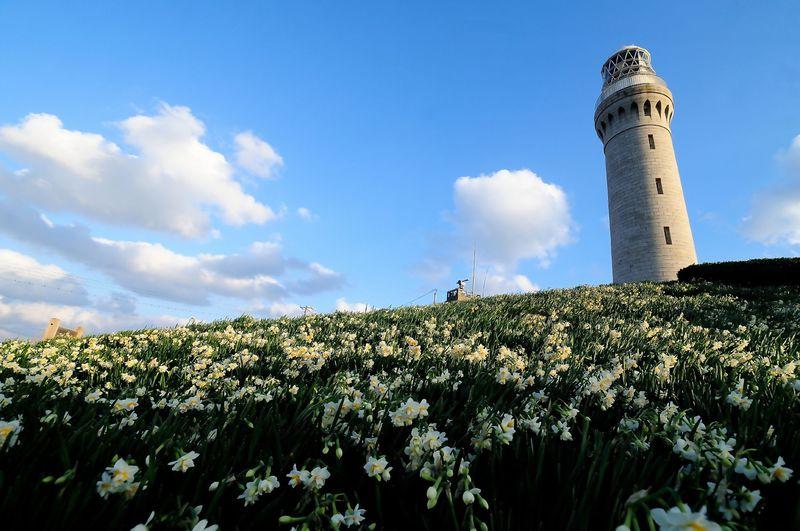 山口「角島」冬の楽しみ方はこれ!灯台とスイセンのコラボは必見