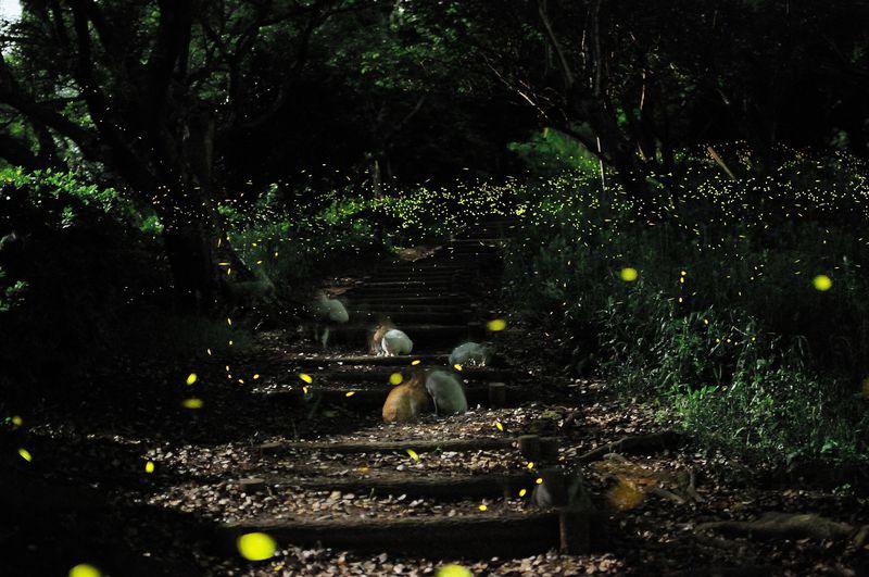 神秘的な光に吸い込まれる!! ヒメボタル観賞の名所「竜王山」