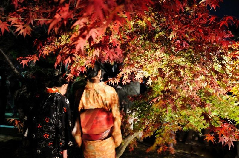 キャンドルイベントと夜の紅葉を楽しむ!!下関「彩りの城下町長府 秋」