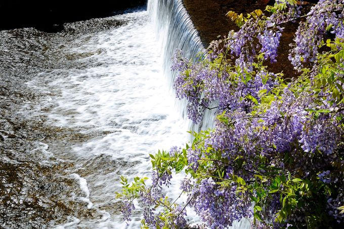 名前の由来に心も和む「愛のふじ橋」〜山口市徳地三谷
