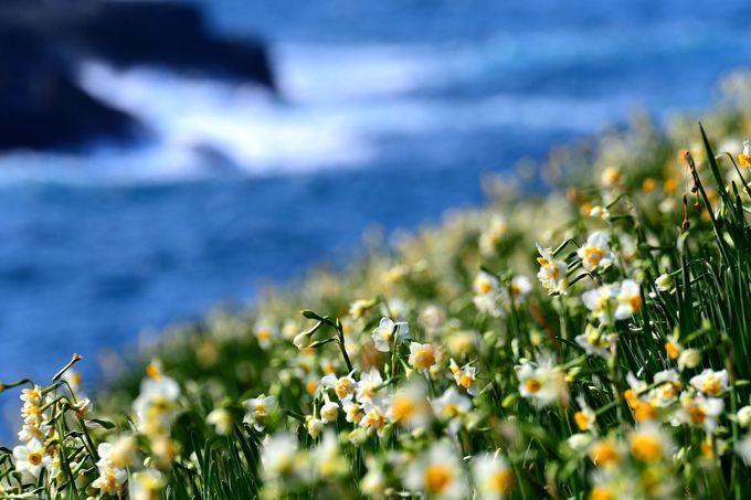 日本海ならではの波しぶきを背景に