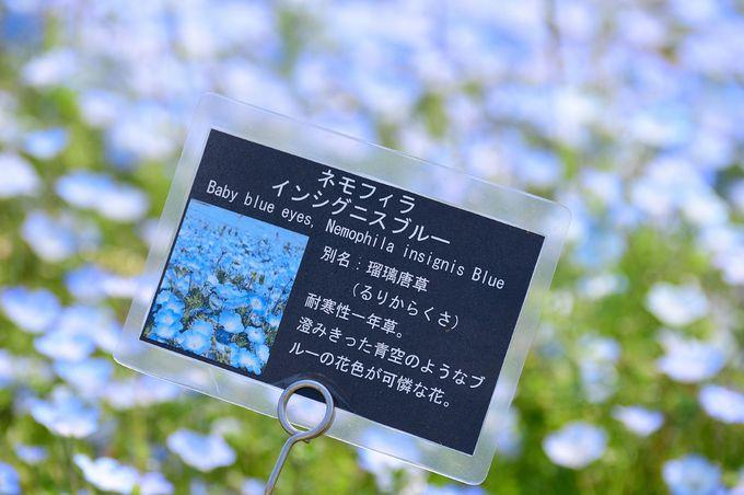 海の中道海浜公園の開園時間は9時30分〜17時30分。