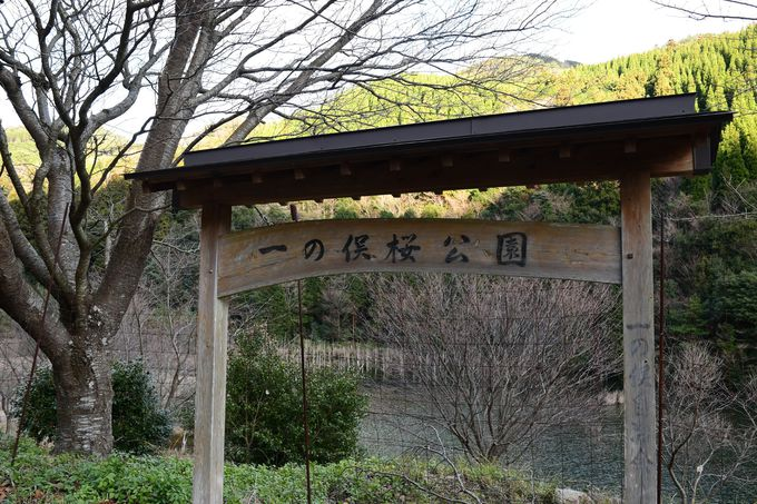 「一の俣桜公園」と書かれた看板が目印