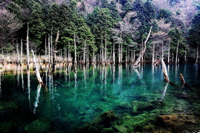 下関の隠れ絶景が話題!「一の俣桜公園・蒼霧鯉池」は神秘のスポット