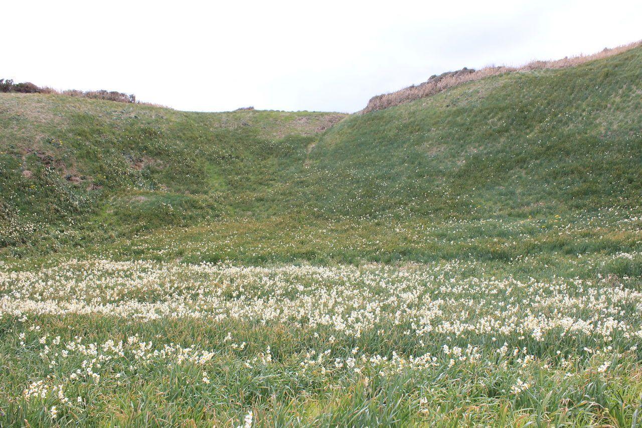 300万本の水仙と3万株のアロエの花を楽しむ、一足早い春を感じさせる、下田爪木崎・白浜への旅