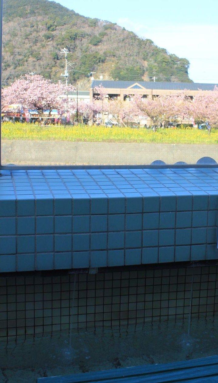 河津桜を見渡せる足湯