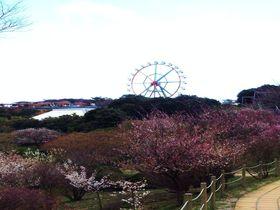 動物園で観梅が楽しめる!?〜東伊豆、伊豆アニマルキングダム〜