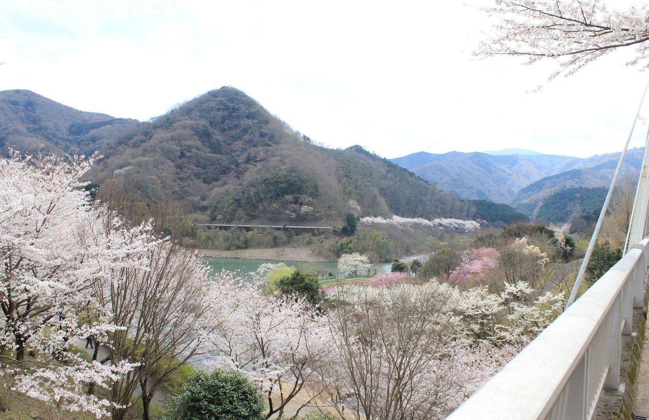 自然に囲まれた桜の名所
