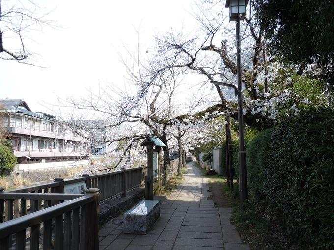 伊東市中心部の桜の見所