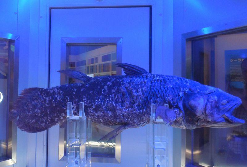 世界に類がない!シーラカンスを展示する『沼津港深海水族館』〜沼津市〜