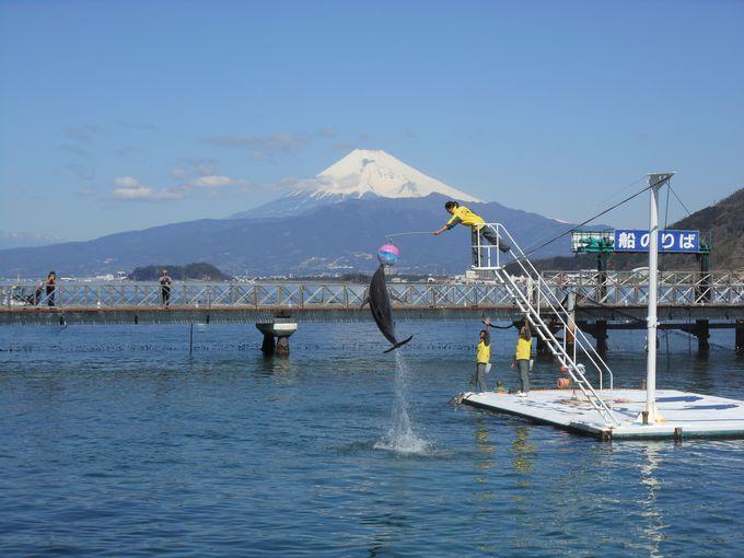 日本一の富士山を背に、壮大なイルカのジャンプ!!