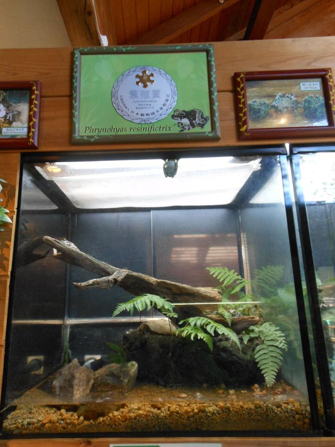 カエルの種類、日本一です!