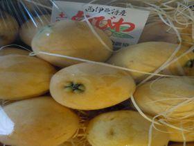一度は食べたい!初夏の宝石『幻の白びわ』を求め、伊豆市土肥へ