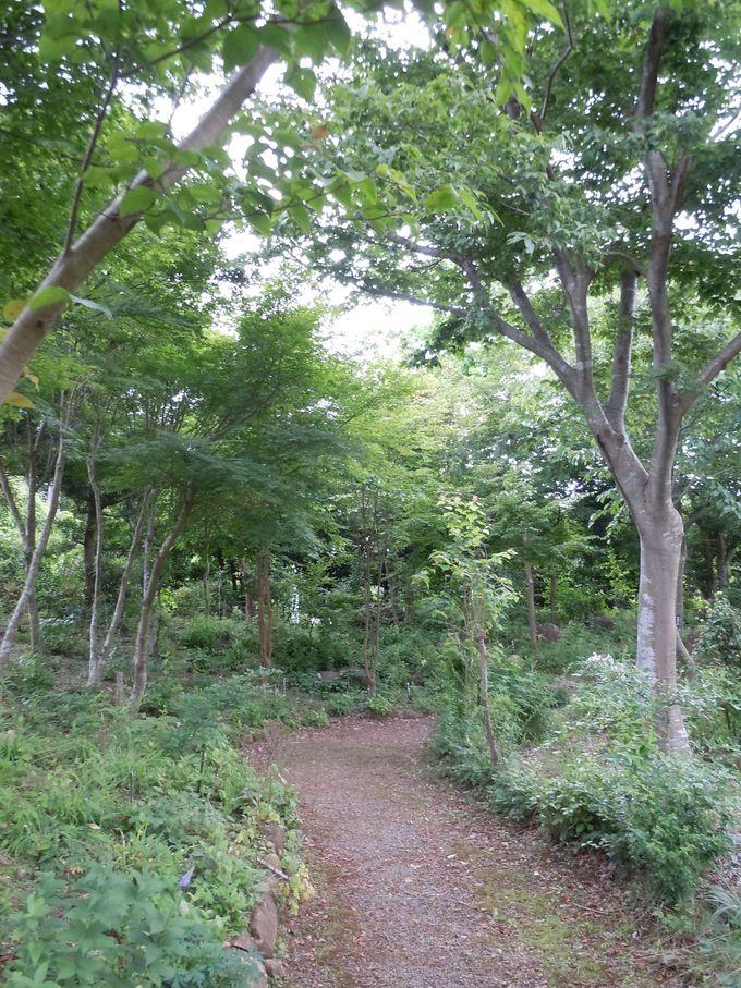 自然豊かな植物園