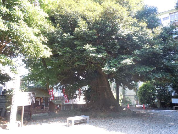 タブの木の小さな神社