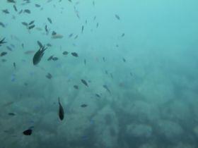 伊東で魚目線の海中探検!半潜水式海底展望船『はるひら丸』