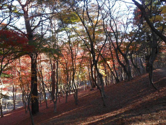 富士山も見えるもみじ林