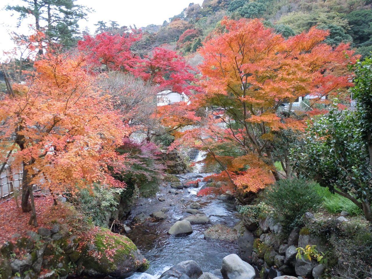 日本一遅い紅葉が楽しめる!『熱海梅園もみじまつり』