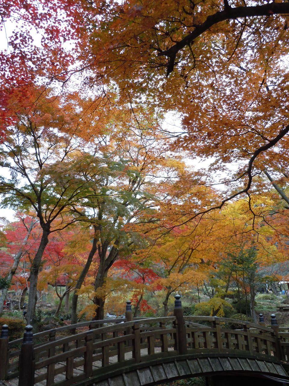 日本らしい情緒ある景色
