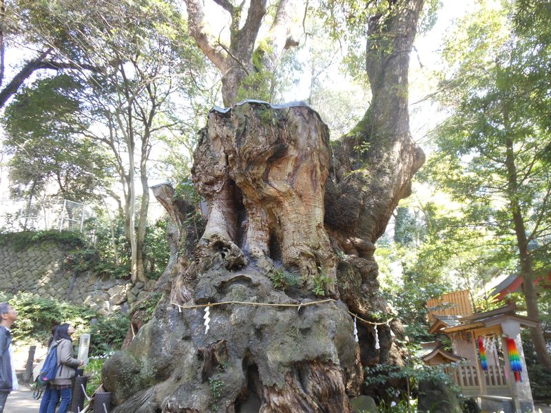 樹齢二千年を超える巨木でパワーアップ!熱海市「來宮神社」