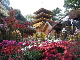 高貴な香りに包まれる!花々が集う三島市・楽寿園「菊まつり」