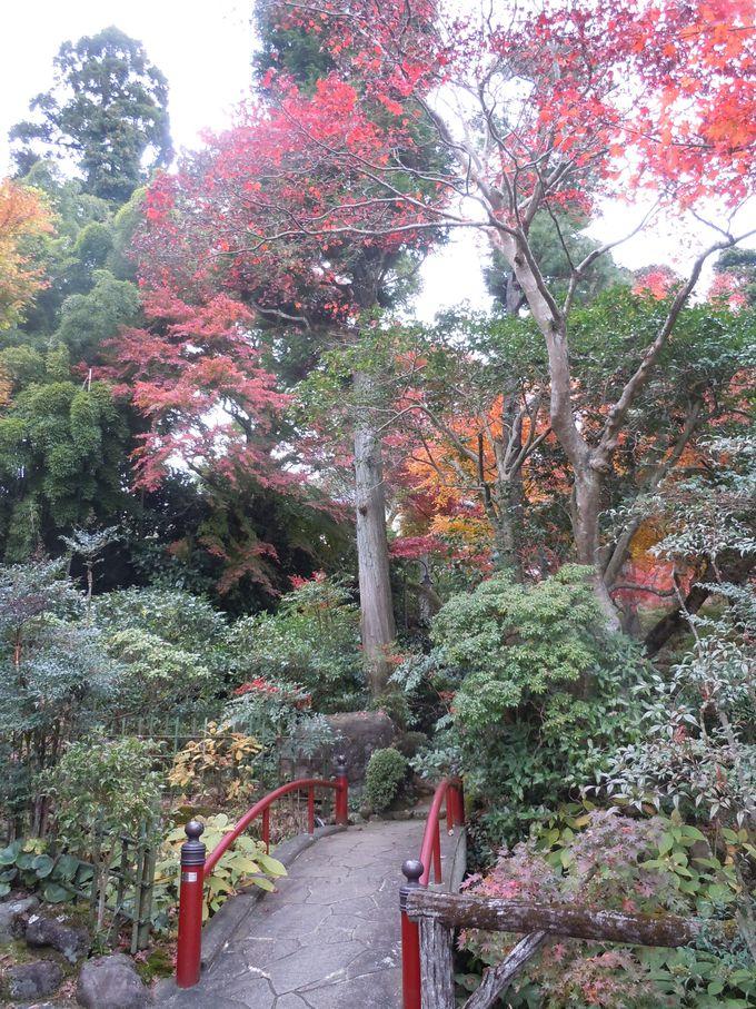 やっぱり違う!日本庭園の風格