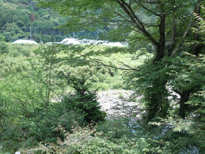 伊豆の自然が満喫できる!緑豊かな美しい光景!