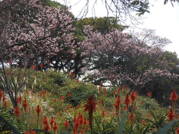 冬の花+春の花が同時に見られるミステリアスな光景?!